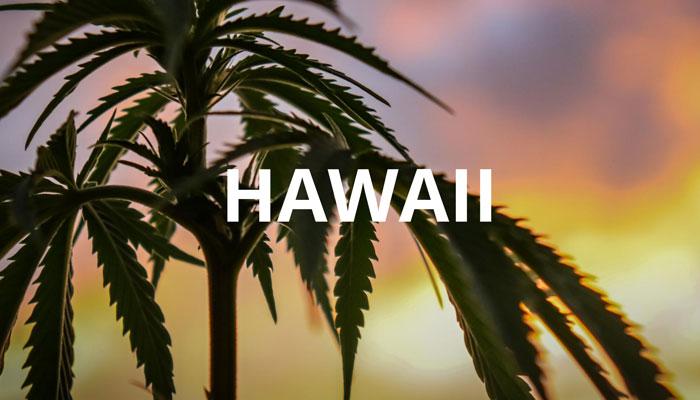 medical-marijuana-hawaii
