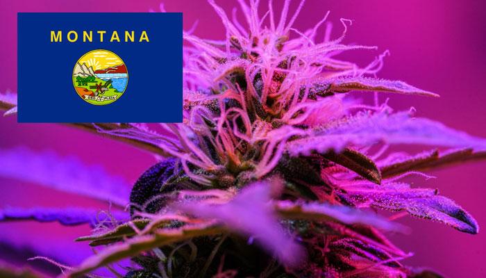 medical-marijuana-montana