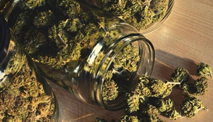 cannabis-curing-in-mason-jars-1