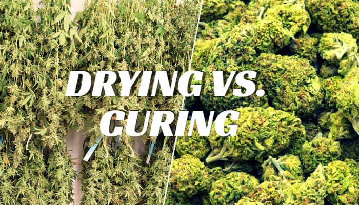 drying-vs-curing